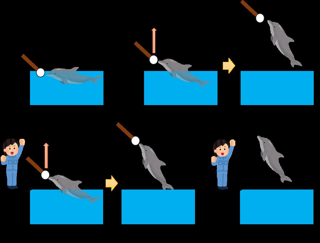 イルカのトレーニング方法