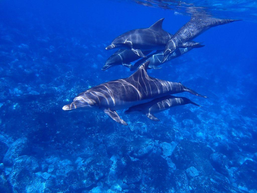 イルカは群れをつくって暮らしている